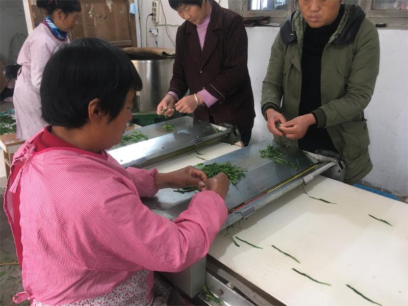 2020 Tai Ping Hou Kui Tea Processing 3