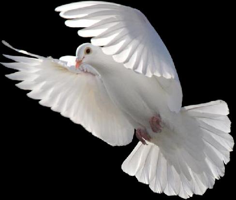 dove look