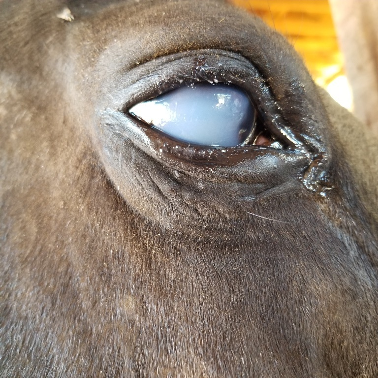 20180618 eye ulcer low px