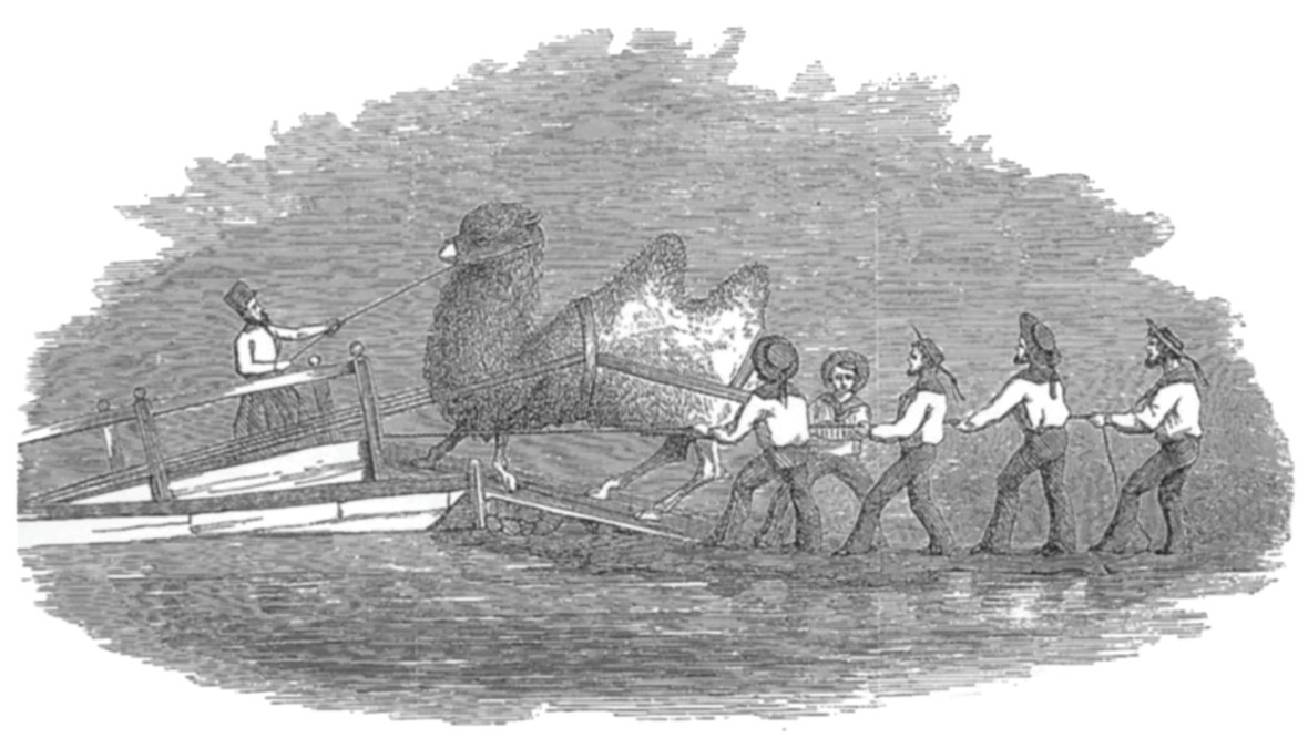 Heap-Embarkation of Camels
