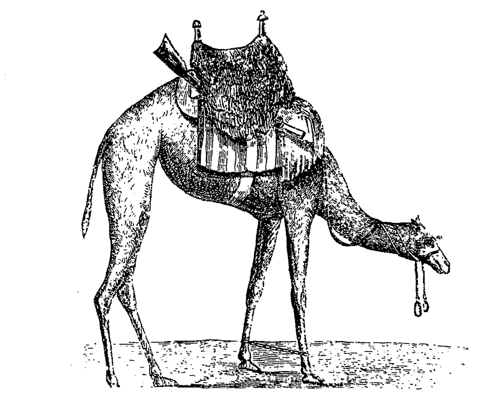 tethered-camel-cavalry-mount