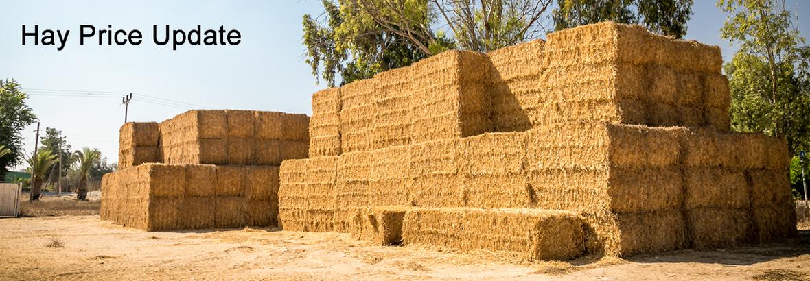 hay update next